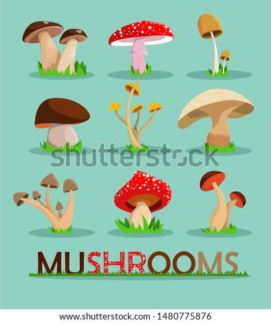 Mushrooms set.  Mushrooms vector illustration set.Mushrooms for cook food and poisonous mushrooms. Vector stock.