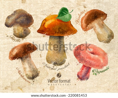 Mushrooms Vector format