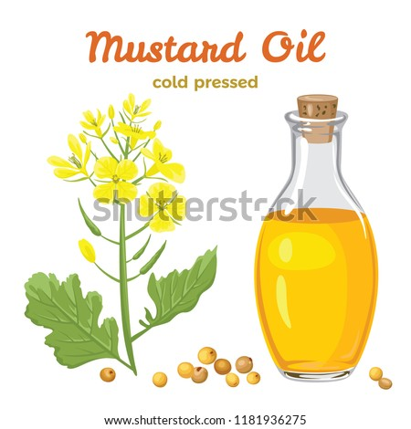 Mustard oil in a glass bottle isolated on white background. Branch with flowers and leaves, mustard seeds. Vector illustration in a flat cartoon style.