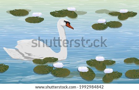 Mute swan swims in a pond with white water lilies. Wild birds white swan Cygnus olor. Realistic vector landscape