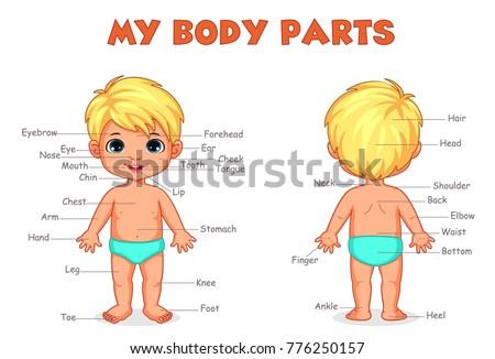 My body parts boy illustration for kids