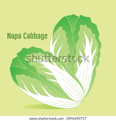 Napa cabbage is the chinese vegetable Stock fotó ©