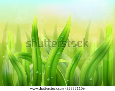 natural background  grass macro