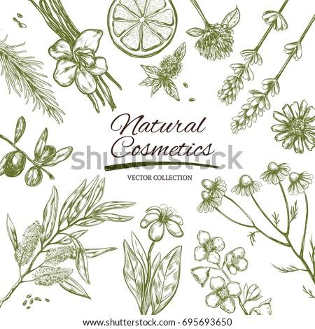 natural cosmetics frame vector