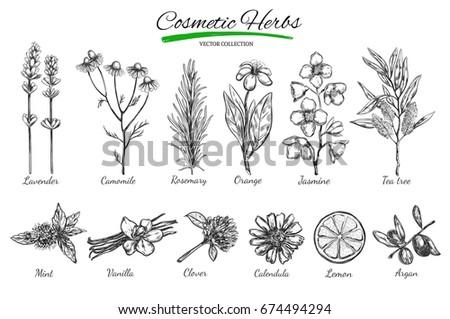 natural cosmetics vector hand