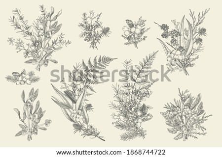 Natural forest bouquets for decoration. Floral arrangements. Evergreens, conifers, berries, leaves, thorns, cones. Vector vintage illustration. Black and white.