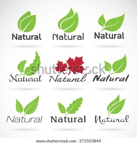 Natural logo design vector template on white background. Leaf icon, Vector leaves for your design