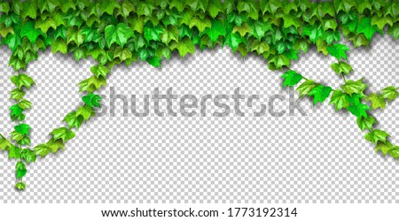 Natural realistic 3d green grape leaf, ivy wall isolated on transparent background. Eco modern style, can be used on flyers, banners web. Nature wallpaper fresh green leaf plant. Vector illustration.  Foto stock ©
