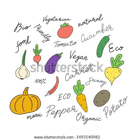 Natural vegetarians, doodles. Vegan kitchen hand drawn, organic vegetarian food. Vector isolated icons illustration set.