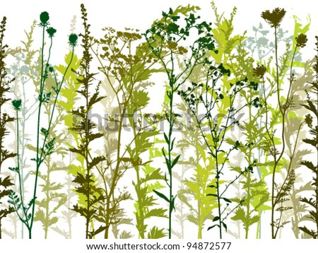 natural wild plants and weeds