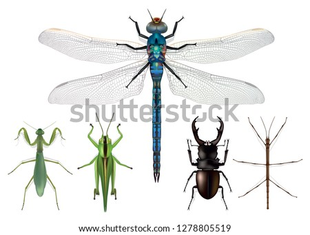 naturalistic insects board  top