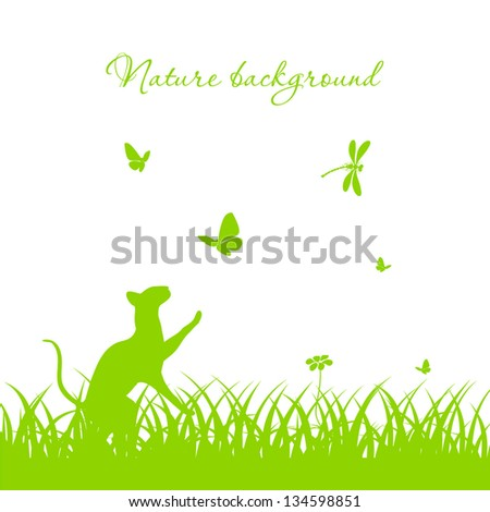 nature background with a cat