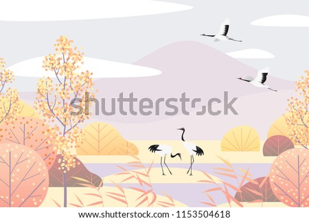 nature background with wetland