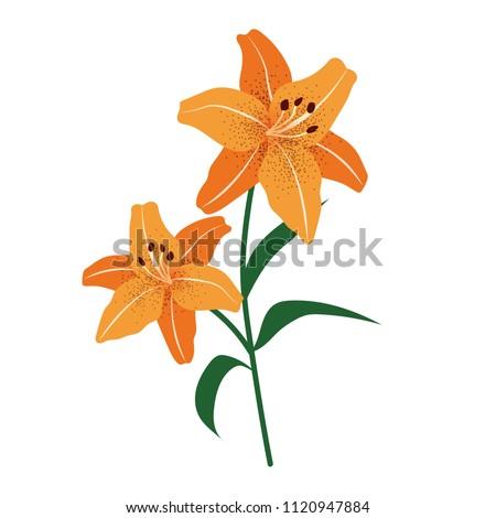 Nature flower orange tiger lily, vector botanic garden floral leaf plant.