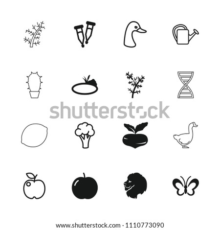 Nature icon. collection of 16 nature filled and outline icons such as apple, beet, lion, pipette, pond, cauliflower, goose. editable nature icons for web and mobile.