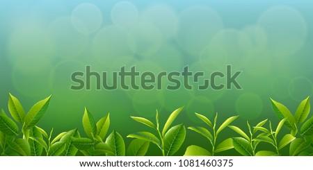 nature leaves green tea on spring  background. vector design illustrator.