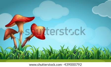 nature scene with mushrooms in
