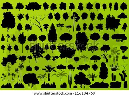 nature tree  bush  scrub  palm