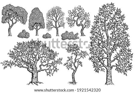 Nature. Trees and bushes. Design set. Art detailed editable illustration. Vector vintage engraving. Isolated on white background. 8 EPS Photo stock ©