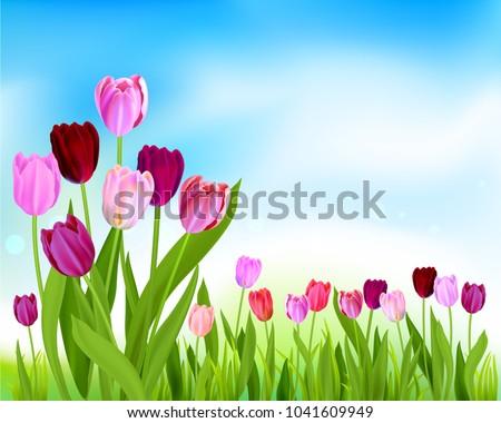nature tulip spring banner