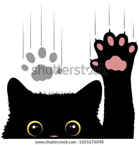 naughty cat scratches window
