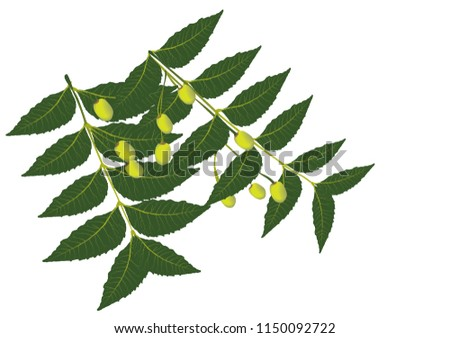 Neem leaf is used for leprosy, eye disorders, bloody nose, intestinal worms, stomach upset, loss of appetite, skin ulcers, diseases of the heart and blood vessels (cardiovascular disease), fever,