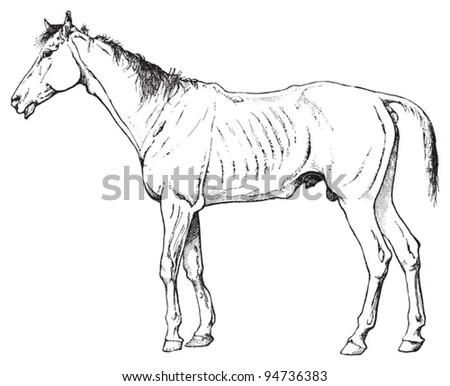 Neglected sick horse / vintage illustration from Meyers Konversations-Lexikon 1897 - stock vector