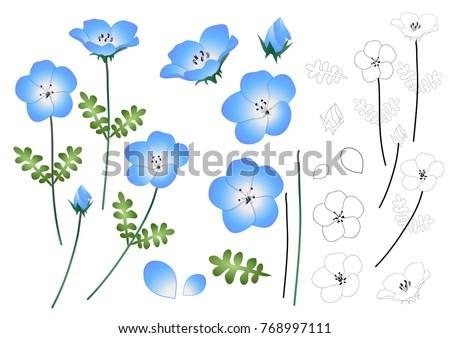 Stock Photo Nemophila Baby Blue Eyes Flower Outline. Vector Illustration. isolated on White Background.