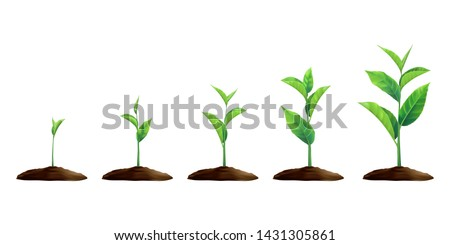 New Realistic sprouts. Phases of plant growing. Seeds sprout in ground. Sprout, plant, tree growing agriculture icons isolated on white background. Evolution concept. 3D Vector EPS 10
