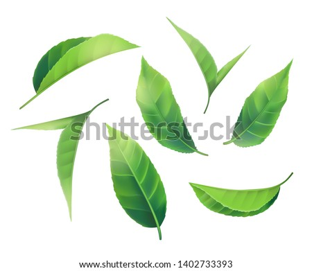 New Set of 3d Realistic Green Leaves Spring Leaf Collection. Element for design, advertising, packaging products white background illustration EPS10