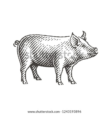 New Year 2019 Sign Zodiac Pig. Hand drawn engraving style illustrations.