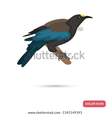new zeland tui bird color flat