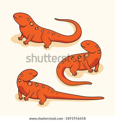 Newt Salamander Cartoon Amphibian Reptile Illustrations Set Collections ストックフォト ©