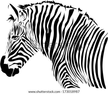 Zebra Head - Download Free Vector Art, Stock Graphics & Images