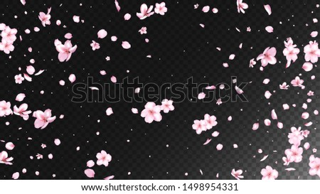 Nice Sakura Blossom Isolated Vector. Beautiful Showering 3d Petals Wedding Pattern. Japanese Beauty Spa Flowers Wallpaper. Valentine, Mother's Day Feminine Nice Sakura Blossom Isolated on Black