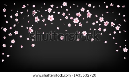 Nice Sakura Blossom Isolated Vector. Pastel Flying 3d Petals Wedding Border. Japanese Beauty Spa Flowers Illustration. Valentine, Mother's Day Realistic Nice Sakura Blossom Isolated on Black