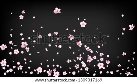 Nice Sakura Blossom Isolated Vector. Realistic Blowing 3d Petals Wedding Texture. Japanese Gradient Flowers Illustration. Valentine, Mother's Day Tender Nice Sakura Blossom Isolated on Black
