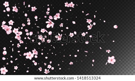 Nice Sakura Blossom Isolated Vector. Realistic Falling 3d Petals Wedding Paper. Japanese Style Flowers Wallpaper. Valentine, Mother's Day Watercolor Nice Sakura Blossom Isolated on Black