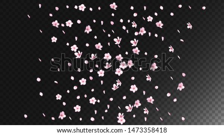 Nice Sakura Blossom Isolated Vector. Realistic Falling 3d Petals Wedding Texture. Japanese Nature Flowers Wallpaper. Valentine, Mother's Day Magic Nice Sakura Blossom Isolated on Black