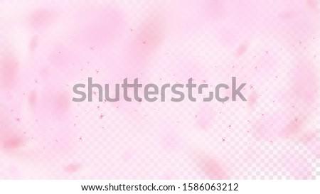 Nice Sakura Blossom Isolated Vector. Spring Flying 3d Petals Wedding Frame. Japanese Bokeh Flowers Illustration. Valentine, Mother's Day Summer Nice Sakura Blossom Isolated on Rose
