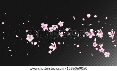 Nice Sakura Blossom Isolated Vector. Spring Flying 3d Petals Wedding Paper. Japanese Blurred Flowers Illustration. Valentine, Mother's Day Feminine Nice Sakura Blossom Isolated on Black