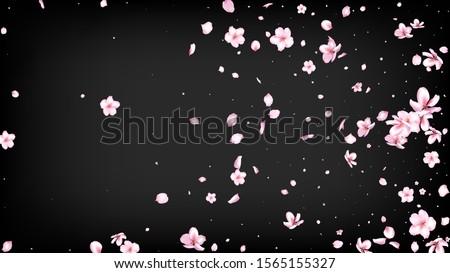 Nice Sakura Blossom Isolated Vector. Tender Blowing 3d Petals Wedding Frame. Japanese Bokeh Flowers Wallpaper. Valentine, Mother's Day Spring Nice Sakura Blossom Isolated on Black