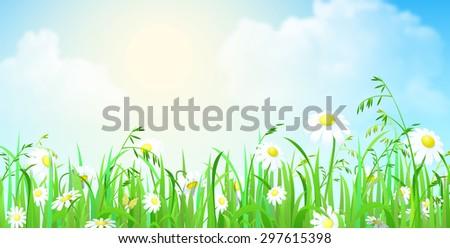 nice shiny fresh daisy