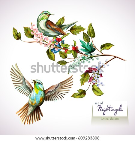 nightingale on branches with