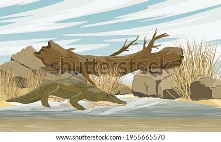 nile crocodile crocodylus