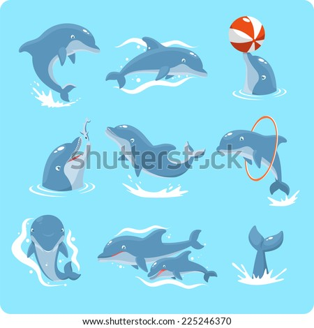 nine dolphin set collection