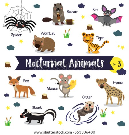 Shutterstock Nocturnal Animals cartoon on white background with animal name. Set 3.