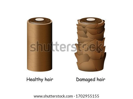normal and damaged hair. Surface of healthy and damaged hair under the microscope. closeup of Hair follicle condition. Vector illustration for Trichology, education and medical use.