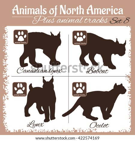 north america animals and