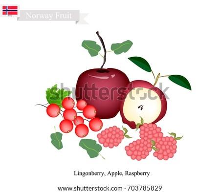 norwegian fruit  illustration